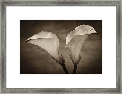 Calla Lilies In Sepia Framed Print by Sebastian Musial