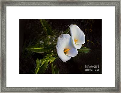 Calla Lily Beauty Framed Print by Al Bourassa