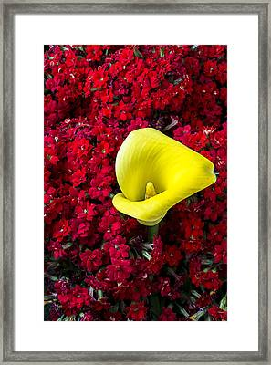 Calla Lily In Red Kalanchoe Framed Print by Garry Gay