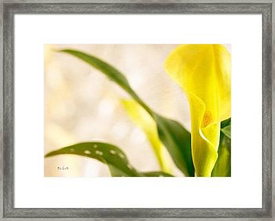 Calla Lily Two Framed Print by Bob Orsillo