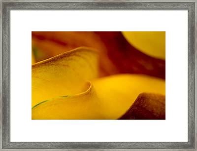 Calla Lily Waves Framed Print by Sebastian Musial