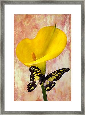 Calla Lily With Butterfly  Framed Print by Garry Gay