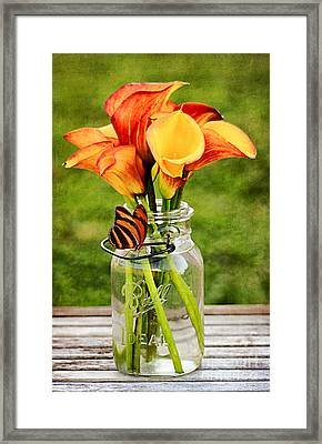 Calla's And The Butterfly Framed Print by Darren Fisher