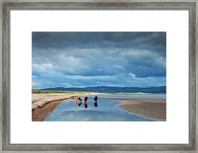 Calves On The The Cunnigar, Dungarvan Framed Print by Panoramic Images