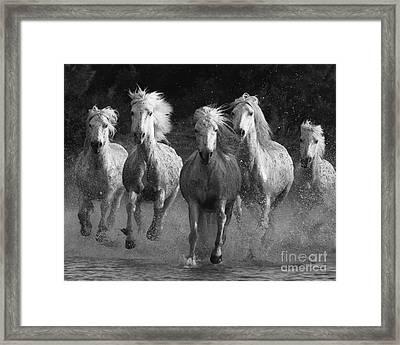 Camargue Horses Running Framed Print by Carol Walker