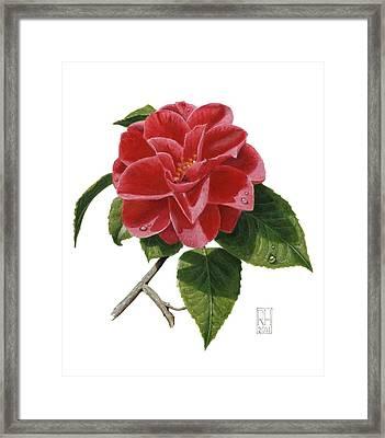 Camellia Framed Print by Richard Harpum