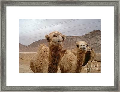 Camels Framed Print by Noa Yerushalmi