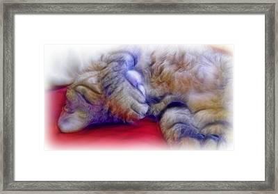 Camera Shy Kitty Framed Print by Lilia D