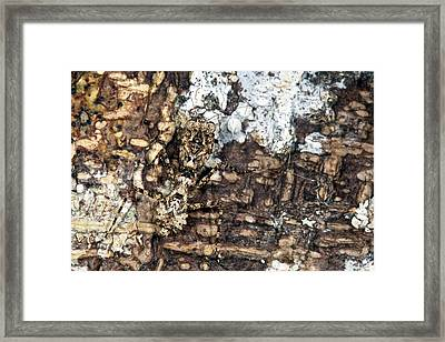 Camouflaged Praying Mantis Framed Print by Alex Hyde