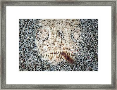Camouflaged Whitemargin Stargazer Framed Print by Ethan Daniels