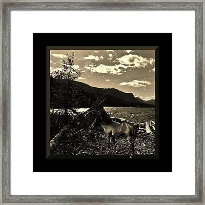 Camp Site Framed Print by Barbara St Jean