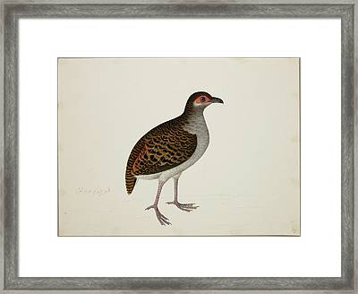 Campbell's Tree Partridge Framed Print by British Library