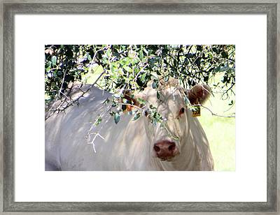 Can You See Me Now? Framed Print by Dorothy Menera
