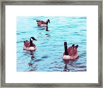 Canada Eh  Framed Print by Sheryl Burns