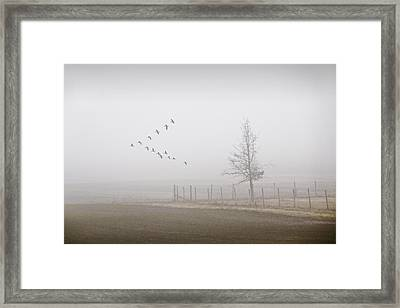 Canada Geese Flying On A Foggy Morning Framed Print by Randall Nyhof