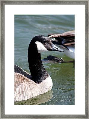 Canada Goose Profile Framed Print by Anita Oakley