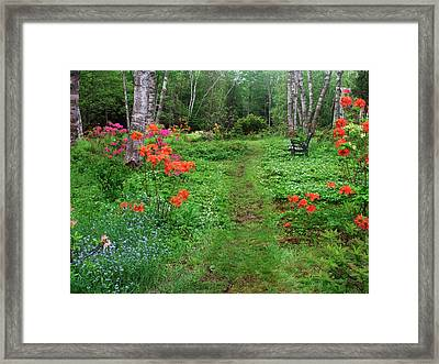 Canada, New Brunswick, Garden And Forest Framed Print by Jaynes Gallery