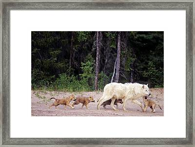 Canada, Northwest Territories, Great Framed Print by Jaynes Gallery