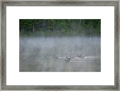 Canada, Quebec Canada Geese In Fog Framed Print by Jaynes Gallery