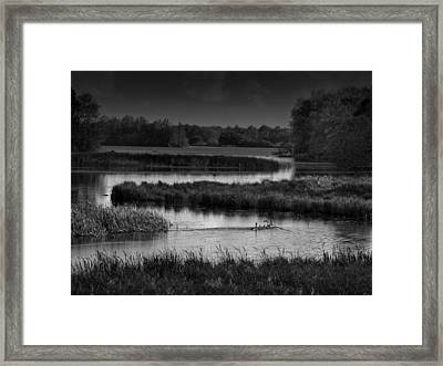 Canadian Geese In The Wetlands Framed Print by Mountain Dreams