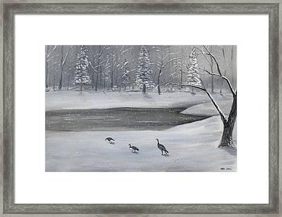 Canadian Geese In Winter Framed Print by Brandon Hebb