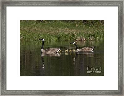 Canadian Geese Framed Print by Linda Freshwaters Arndt