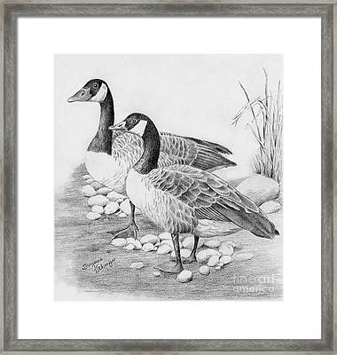 Canadian Geese  Framed Print by Suzanne Schaefer