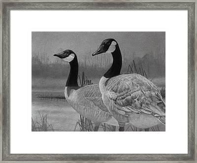 Canadian Geese Framed Print by Tim Dangaran