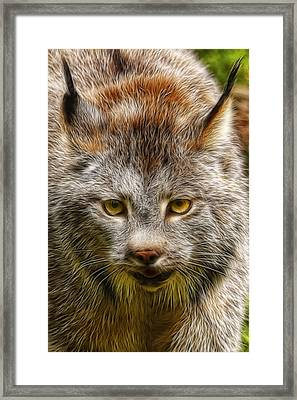Canadian Lynx W2737 Framed Print by Wes and Dotty Weber