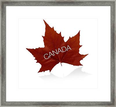 Canadian Maple Leaf Framed Print by Aged Pixel