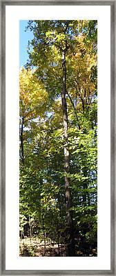 Canadian Wild Tall Trees Fall Season Nature Natural Beautiful Pleasing Scenes   Framed Print by Navin Joshi