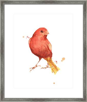 Canary Bird Framed Print by Alison Fennell