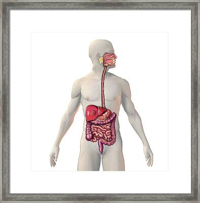Cancer Of The Liver Framed Print by Carol & Mike Werner