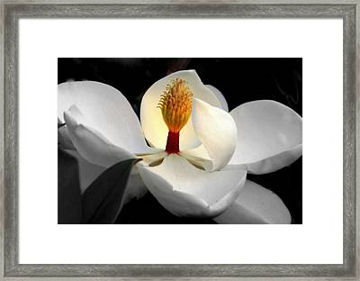 Candle In The Wind Framed Print by Karen Wiles