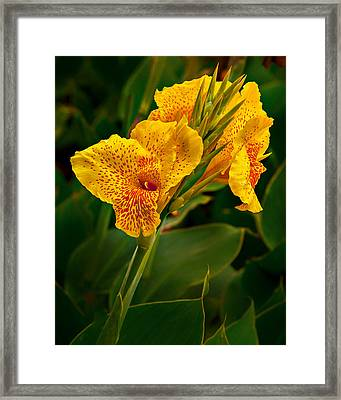 Canna Blossom Framed Print by Mary Jo Allen