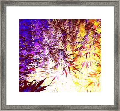 Canna Dusk 1 Framed Print by David Munoz