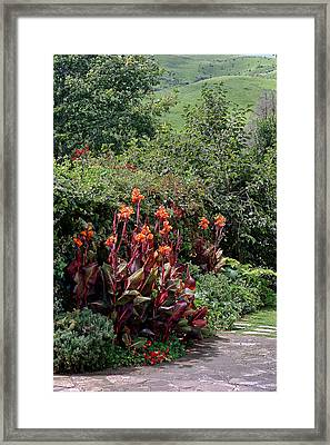 Canna Flowers On Pathway Framed Print by Linda Phelps