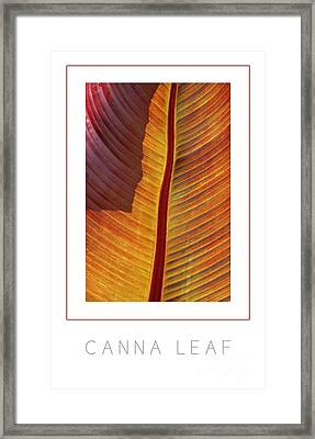 Canna Leaf Poster Framed Print by Mike Nellums