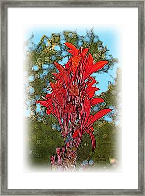 Canna Lily Framed Print by Dennis Lundell