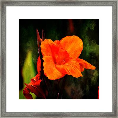 Canna Lily Wyoming Framed Print by Deena Stoddard