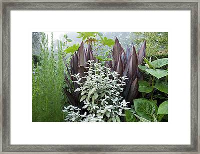 Canna 'mystique' And Buddleia Glomerata Framed Print by Science Photo Library