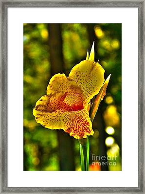 Canna Wow Framed Print by Kim Pate