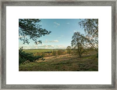 Cannock Chase Forest In Autumn Framed Print by David Clarke