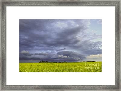 Canola And Storm Framed Print by Dan Jurak