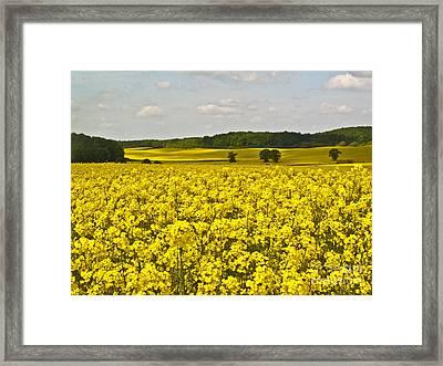 Canola Field Framed Print by Heiko Koehrer-Wagner