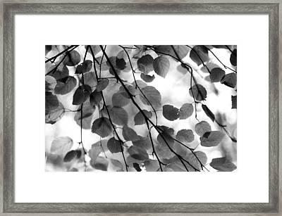 Canopy Framed Print by Aaron Aldrich
