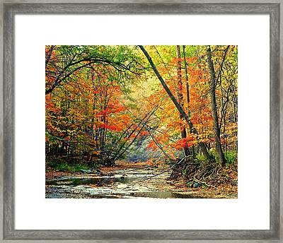 Canopy Of Color II Framed Print by Frozen in Time Fine Art Photography