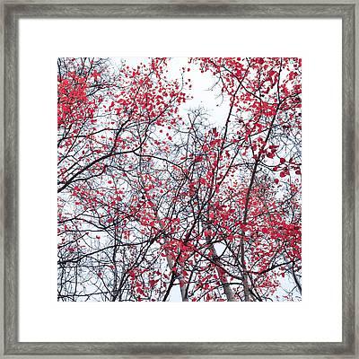 Canopy Trees Framed Print by Priska Wettstein