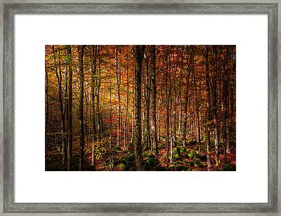 Can't Find My Way Home Framed Print by Stefano Termanini