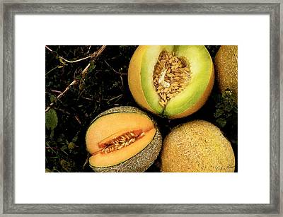 Cantaloupe Framed Print by Cole Black